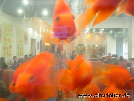 Nur Dekoration? Oder ein Goldfisch-Frischhaltebecken?